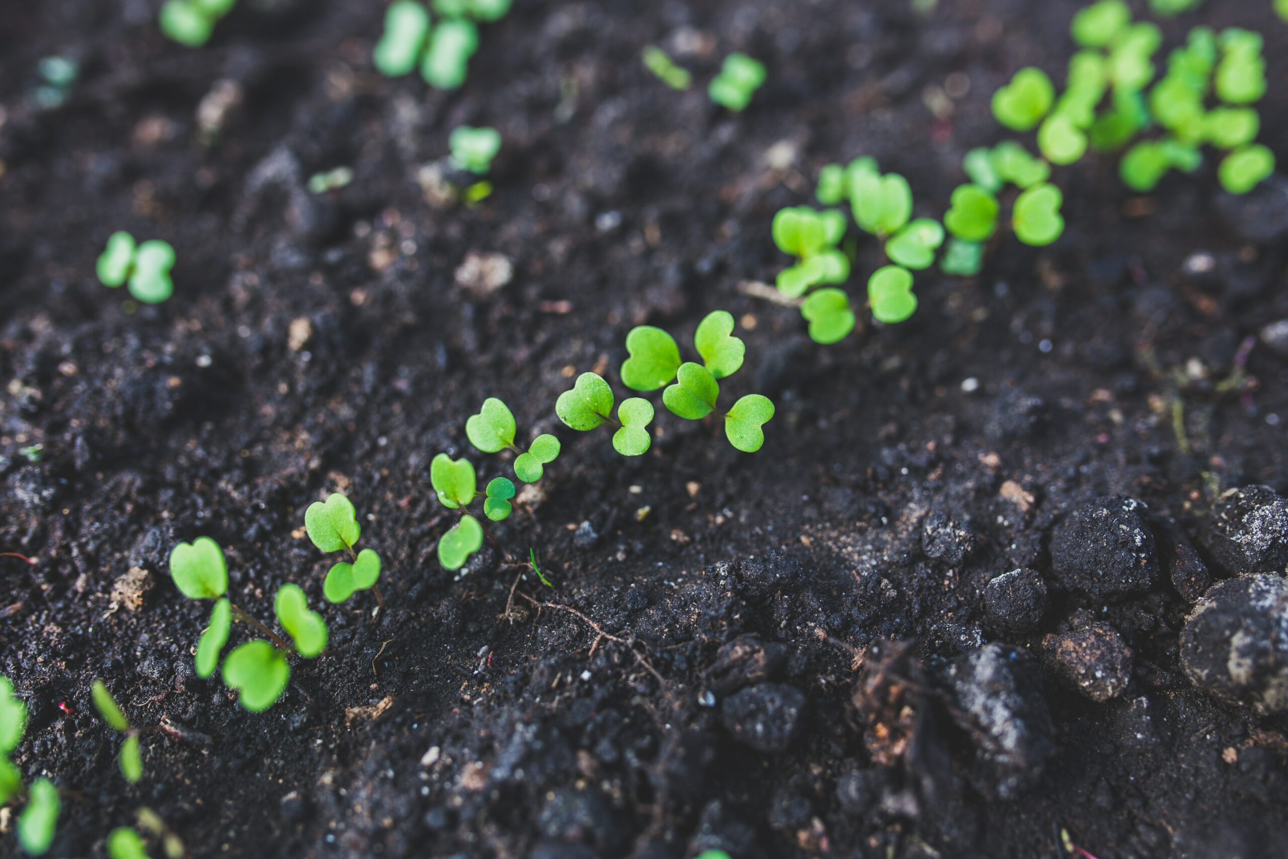 The Principles and Science of Developing Regenerative Agriculture Ecosystems